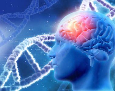 brain-new2