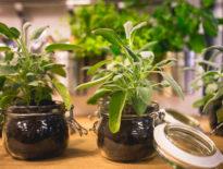 Jak być eko? Poznaj 8 prostych zasad ekologicznego postępowania w każdym domu