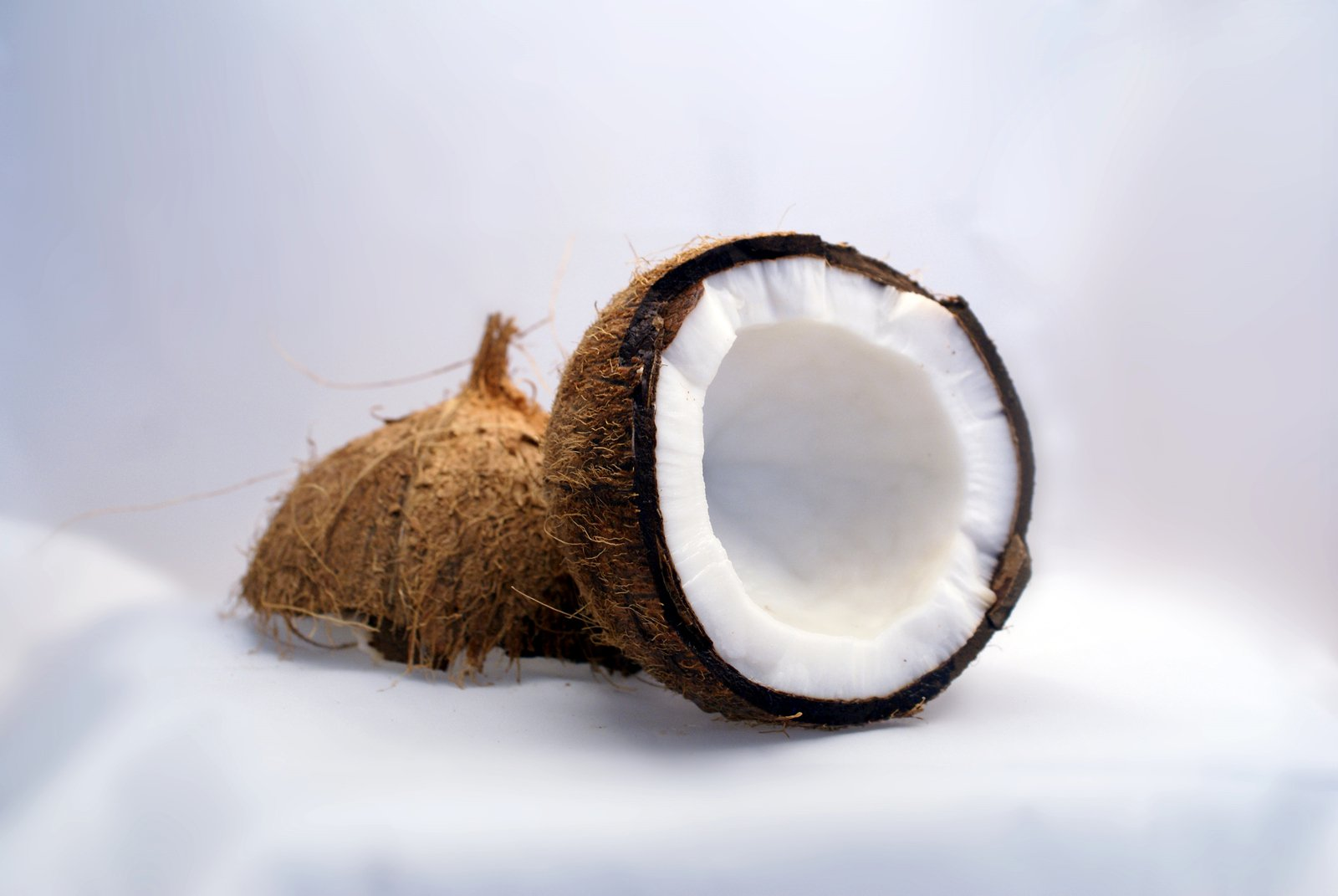 coconut interior view